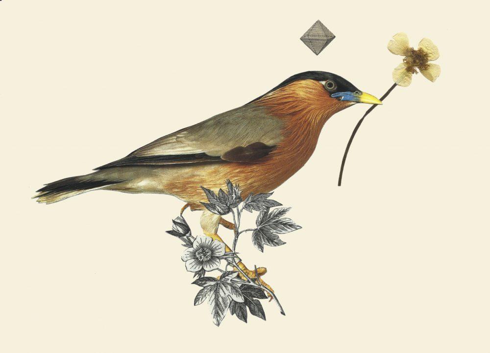 THE BIRDS01