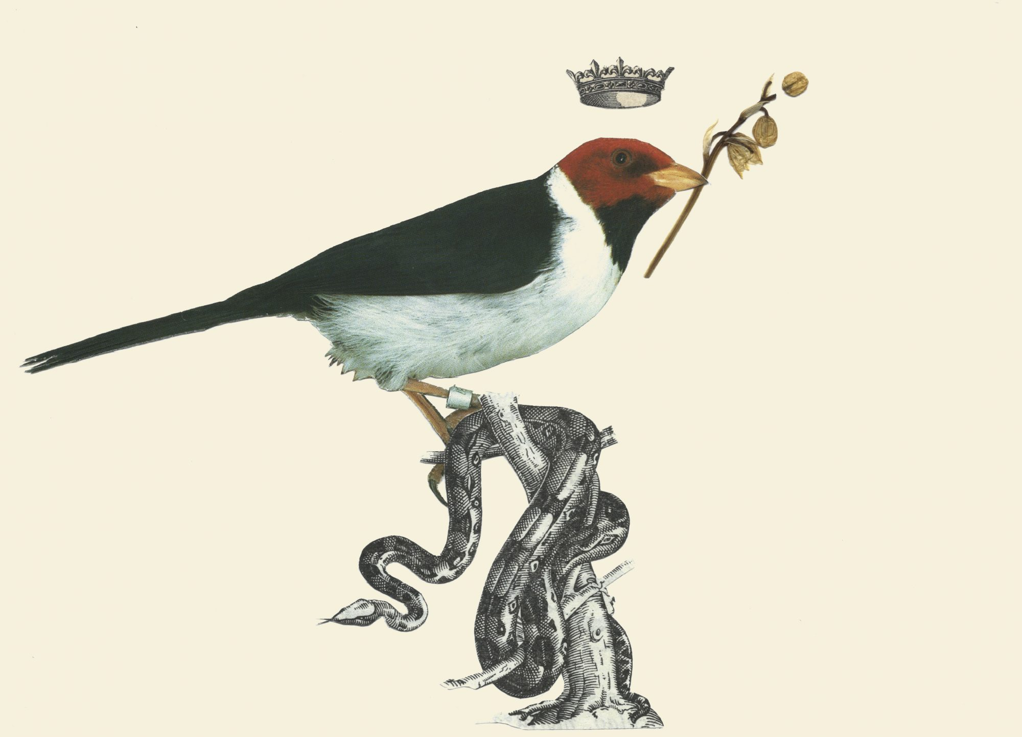 THE BIRDS03